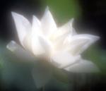 一对同年同月同日生与死的恋人——周庆麟、范霞纪念馆